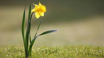 描写春天的风的句子