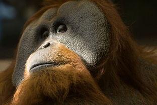 国际野生动物保护协会发布最新濒危动物名录