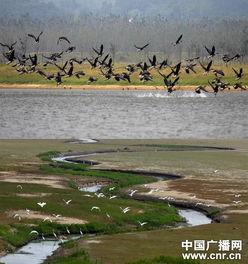 鄱阳湖冬夏候鸟交替