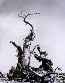 ...影展 树之歌 黑白世界 ,采辑几幅,以飨影友