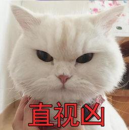 表情 超级凶猫咪表情包下载 超级眨眼凶猫咪表情包下载 西西 ... 表情