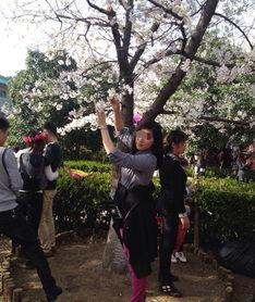 武大樱花节造花雨爬樱花树 做个安静的赏樱人