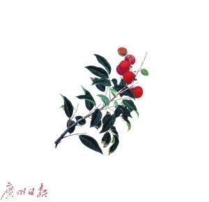 植物科学画 为植物绘制 身份证 图