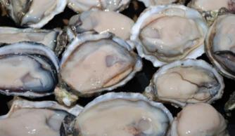 花核湿揉捏-俗名:车白   学名:文蛤   文蛤有清热利湿、化痰、散结的功效,对肝...