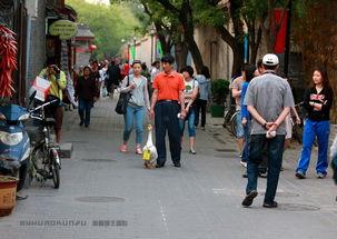 表情 城 表情 带身份证的大白鹅 广顺园主 新浪博客 表情