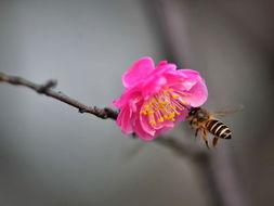 春的表达 恣意绽放的花儿