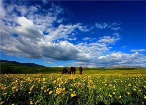 中翻转鸣叫,把天籁之音随意挥洒;野蜜蜂在花朵间来回游荡,打不定...