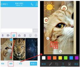 打造最萌的手机QQ,手Q6.5.0支持短视频动态挂件