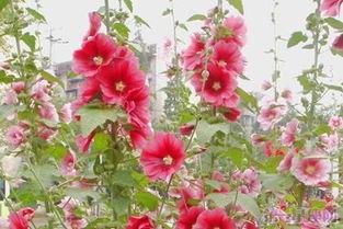 六月份会开哪些什么花 6月夏季开放的花及花语图片介绍