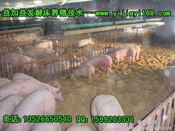 500平米发酵床菌种,发酵床养猪技术,发酵床养猪菌种,发酵床养猪...