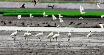 东北湿地 候鸟加油站