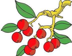 少儿创意美术绘画图 水果