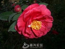 冬季的花朵