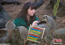 英国动物园进行年度普查 各类动物齐亮相