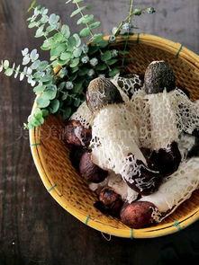 诺笙花-竹笙,也叫做竹荪、竹笋菌、竹松等,自古以来就是名贵的山珍,因其...