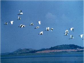 海南美景推荐:[15]天然植物王国六连岭保护区