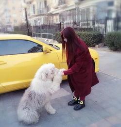 抱着她的宠物狗一起嬉笑玩耍,一身毛茸茸的狗狗更是惹得无数网友纷...