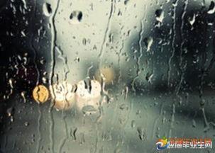 关于写雨的伤感句子