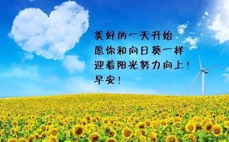 【其他】心向阳光的下一句-5、有一个道理永远是不会变的,就是你必须赚到足够令你安心的钱,...