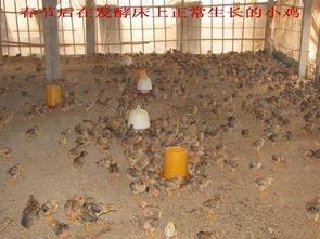 农富康发酵床菌种养猪养鸡菌种发酵剂发酵菌发酵床养猪养鸡发酵菌
