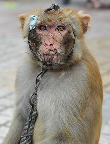 铁面具的猴