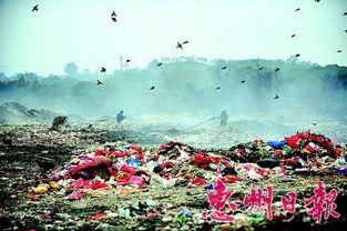 ...时从垃圾场上空飞过.本组图片 本报记者  摄 余烟袅袅,工人拉着水...