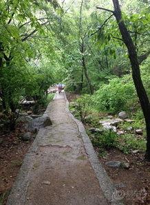 雨中漫步玉女溪,落花流水随心看