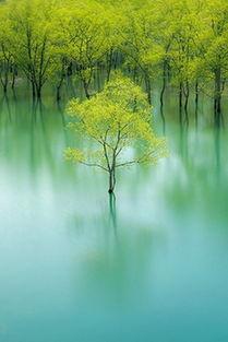 远处的是风景,近处的才是人生.-罕见的树,优美的诗
