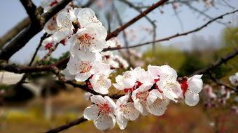 三月花正好 日暖春意浓