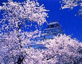 有关樱花和雪的QQ签名和网名