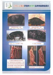 ...啰黑猪肉是市民理想的健康肉品. -你们想吃原生态乡土黑猪肉吗