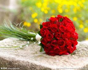 一束红色的玫瑰花图片