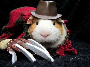 仓鼠变成了恐怖的梦中杀手弗莱迪.(网页截图)-动物也疯狂 万圣节...