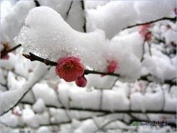 大雪节气的趣味谚语