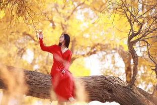 胡杨林,千年等待,只为寻找我的最爱
