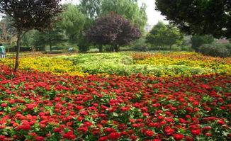 西安 植物园举办迎双节花卉新品种展示会 图