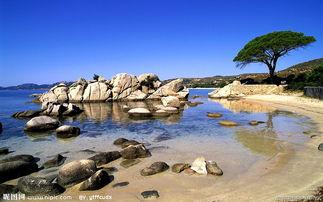 海边的树图片