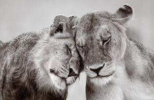 伦敦野生动物摄影展优秀作品