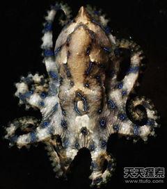 世界上致命动物 最毒蛇类竟在中国