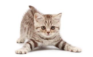 猫感染寄生虫你必须知道的六大途径