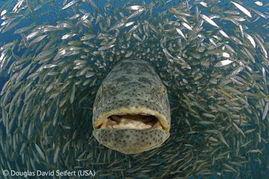 ...国野生生物摄影海底世界获奖作品