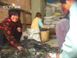 【14p】美国拾次撸-浙江省义乌市近期开展了一次执法行动,发现一些生产企业使用回收塑...