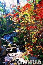 ...瀑布群风景区内秋意盎然,丹枫斑斓,吸引了大批的游客前来观赏...