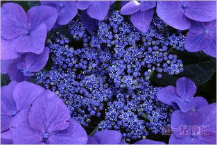 3月20日花语 野生紫萝兰,生日花语清楚