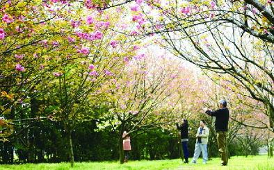 ...省金华市婺城区飘萍路296号-不用去武大人挤人 金华也几处赏樱好去...