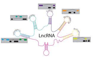...世界的暗物质 非编码RNA