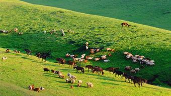 新疆乌鲁木齐南山牧场一日游
