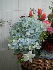 下图蓝色的花是什么花