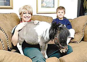 村上里沙 和2只狗番号-在美国圣路易斯市鹅溪农场里,5岁小马萨姆比林娜取了个安徒生童话...