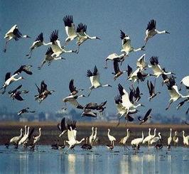 ...慕大 鄱阳湖 候鸟天堂 -解密中国 百慕大 鄱阳湖 旅游新攻略